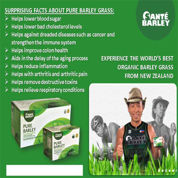 Pure Barley Grass Sante Barley from New Zealand