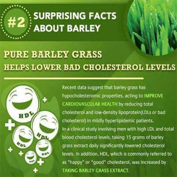 Pure Barley Grass Helps Lower Blood Cholesterol