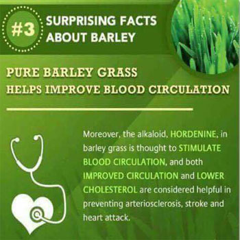 Pure Barley Grass Helps Improve Blood Circulation