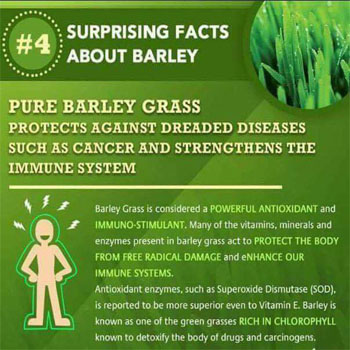 Pure Barley Grass Protect Against Dreaded Diseases Such as Cancer and Strengthens the Immune System