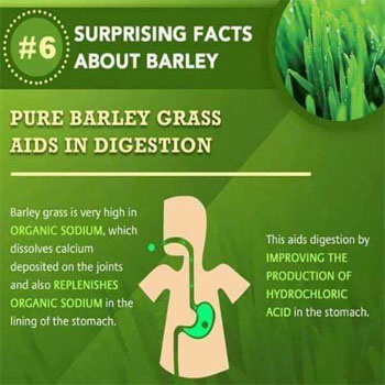 Pure Barley Grass Aids in Digestion