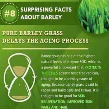 Pure Barley Grass Delays the Aging Process